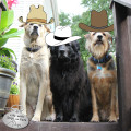 Three dogs in cowboy hats