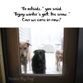"Haiku by Dog: ""Go outside,"" you said. / ""Enjoy winter's gift, the snow."" / Can we come in now?"