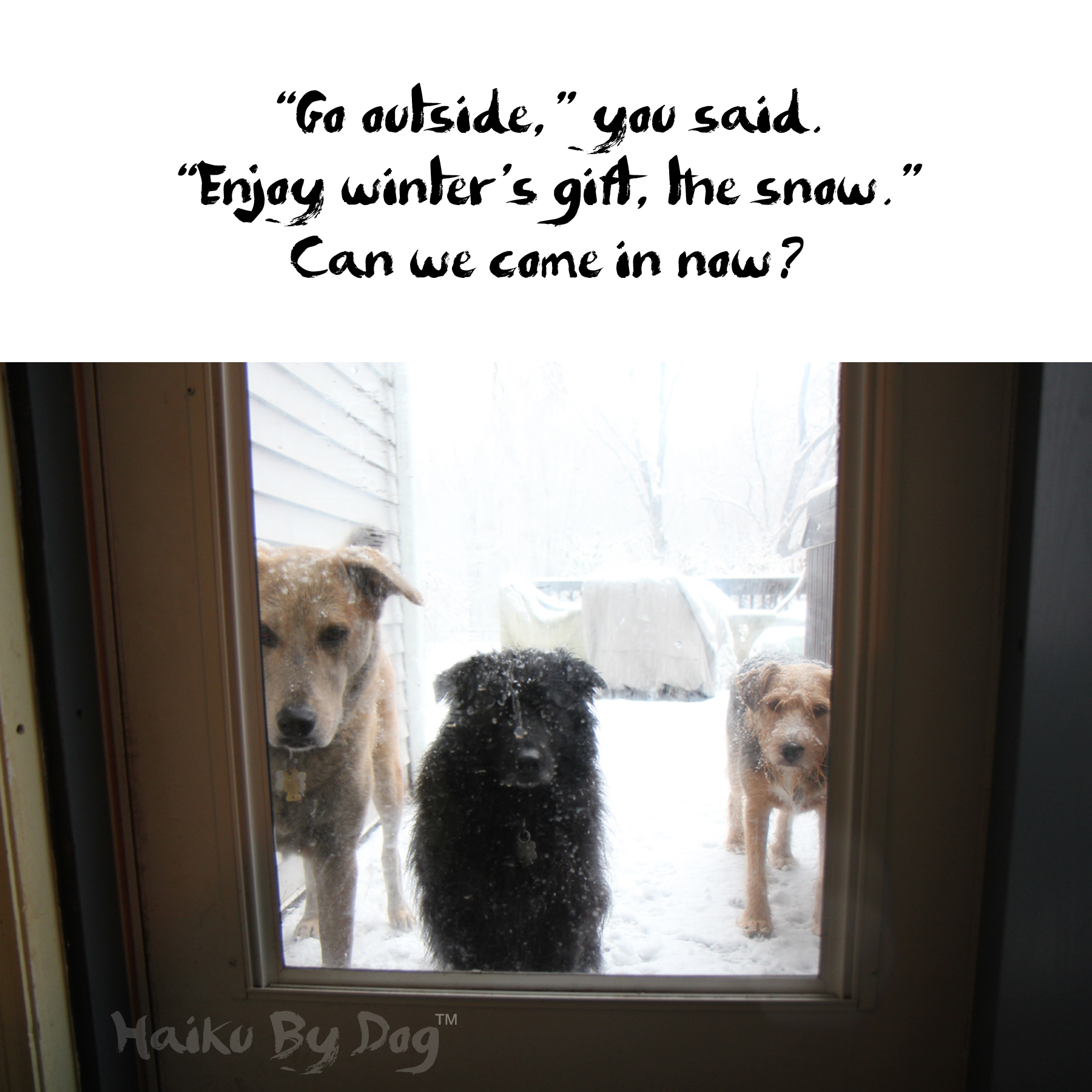 Haiku By Dog Outside Life With Dogs And Cats