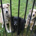 Jasper, Lilah and Tucker swear they're innocent