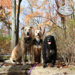 Fall is the New Black: All Dogs Look Good in Autumn