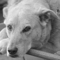 Look deep into the eyes of my dog Jasper