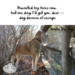 Haiku by Dog: Fence