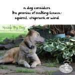 Haiku by Dog: Promise