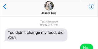 Text from Dog: Getting fit