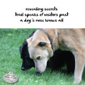 Haiku by Dog: revealing secrets / trail speaks of visitors past / a dog's nose knows all