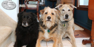 On Leaving: Making goodbye into a treat for my dogs
