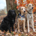 photo of three dogs in the fall
