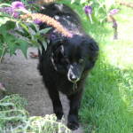 10 Things That Make Black Dogs Special