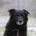The snow on Lilah looks like sugar on a chocolate donut.