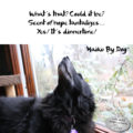 what's that? Could it be? / Scent of hope tantalyzes / Yes! it's dinnertime! #HaikuByDog #HaikusDay #Micropoetry