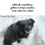 Haiku by Dog: Snowflakes