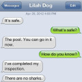 Text from dog: It's safe to go in the pool. I checked it for sharks, jellyfish and crabs that bite your toes.