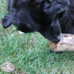 Branching Out: How my dogs react to a fallen tree limb
