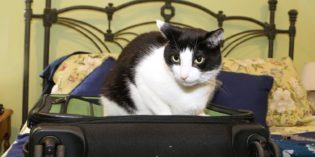 I Don't Always Sit on Your Suitcase #MostInterestingCatInTheWorld