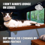 I Don't Always Lounge on Ledges #MostInterestingCatInTheWorld