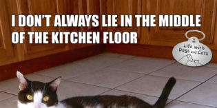 I Don't Always Lie in the Middle of the Kitchen Floor #MostInterestingCatInTheWorld