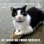 I Don't Always Try on Your Shoes #MostInterestingCatInTheWorld