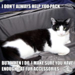 I Don't Always Help You Pack #MostInterestingCatInTheWorld