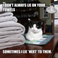 I don't always lie on your towels. Sometimes I lie *next* to them. #MostInterestingCatInTheWorld #StayComfy, my friends.