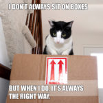 I Don't Always Sit on Boxes #MostInterestingCatInTheWorld