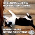 I Don't Always See Things The Way Everyone Else Does. Sometimes I Have a Different Purr-spective.