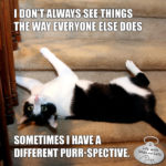 I Don't Always See Things The Way Everyone Else Does #MostInterestingCatInTheWorld