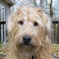 Terrier dog on deck