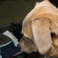 Sad dog sits by suitcase