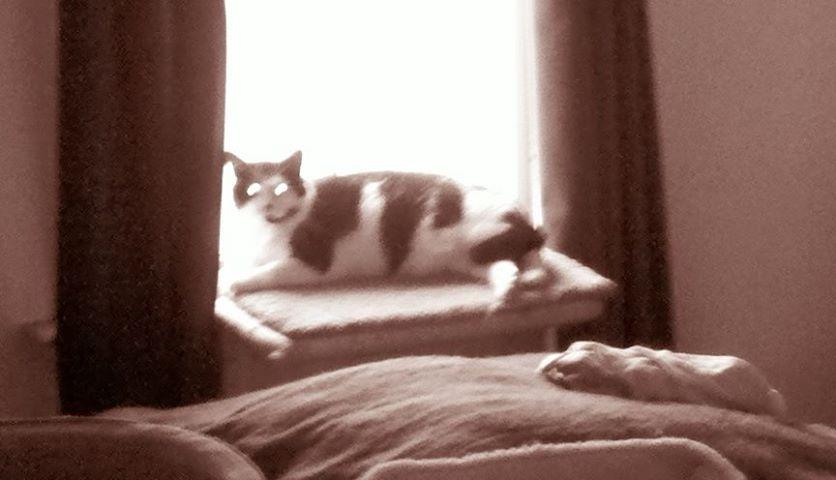 Grain photo of cat on window shelf
