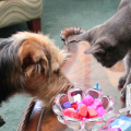 Tucker the dog and Athena the cat from Life with Dogs and Cats play dreidel.