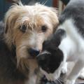 Calvin loves Tucker