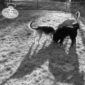 Tucker, Lilah & Jasper of LIfe with Dogs and Cats cast large shadows