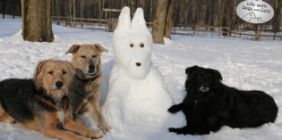 That Snow Dog!