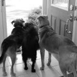 Photo: Sad Dogs; Grandma is Leaving