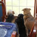Tucker, Lilah and Jasper wait for company.