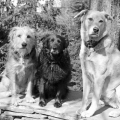 Tucker Lilah and Jasper posing in black and white