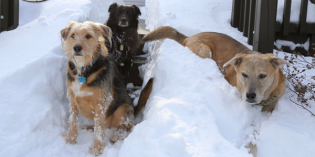 Bedecked in Snow: My Dogs Pose Before and After the Blizzard