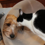 An AAHA Moment: How I Found the Best Vet for My Dogs and Cats