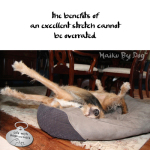 Haiku by Dog: Stretch