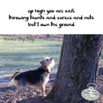 Haiku by Dog: Ground