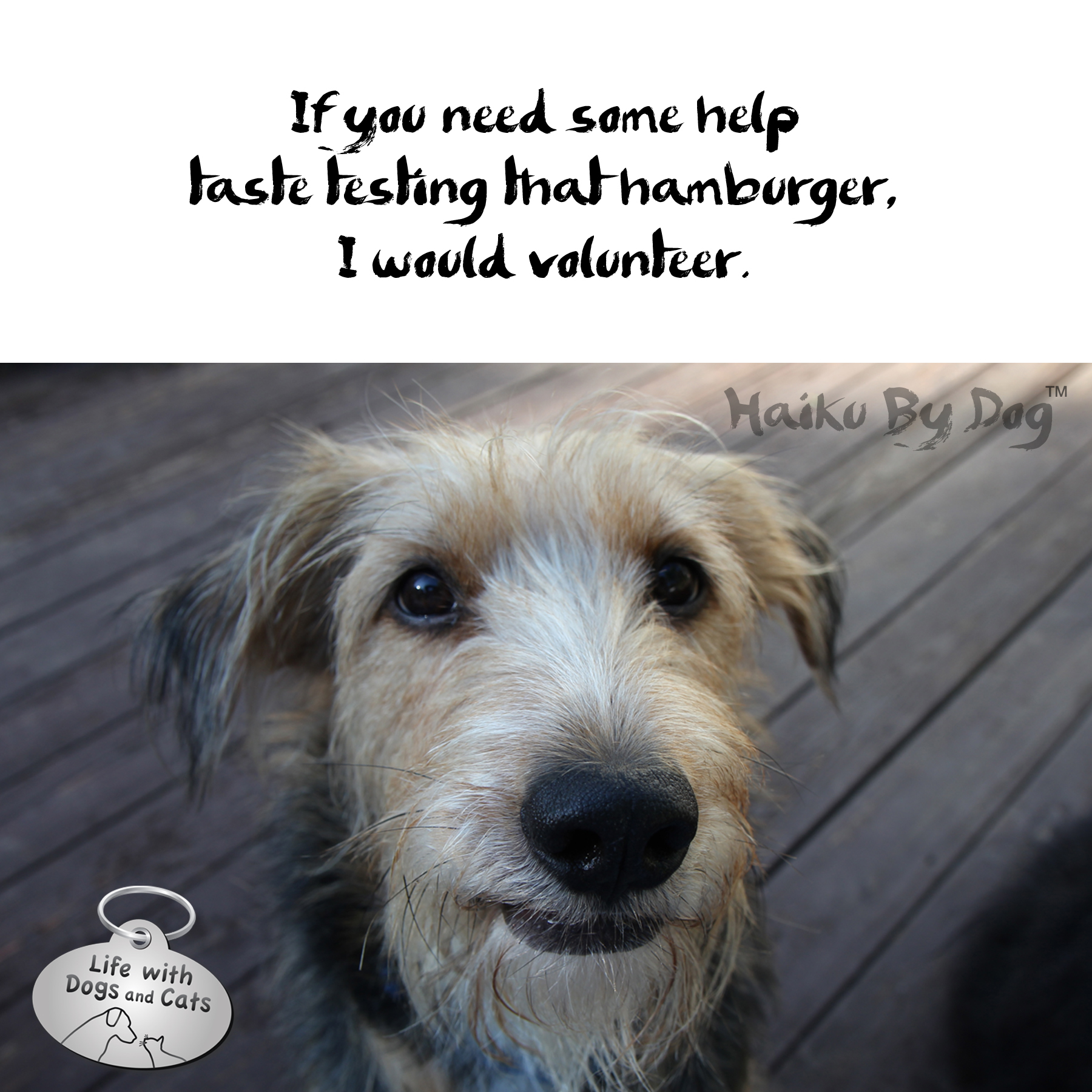 Haiku by Dog: Volunteer : Life with Dogs and Cats