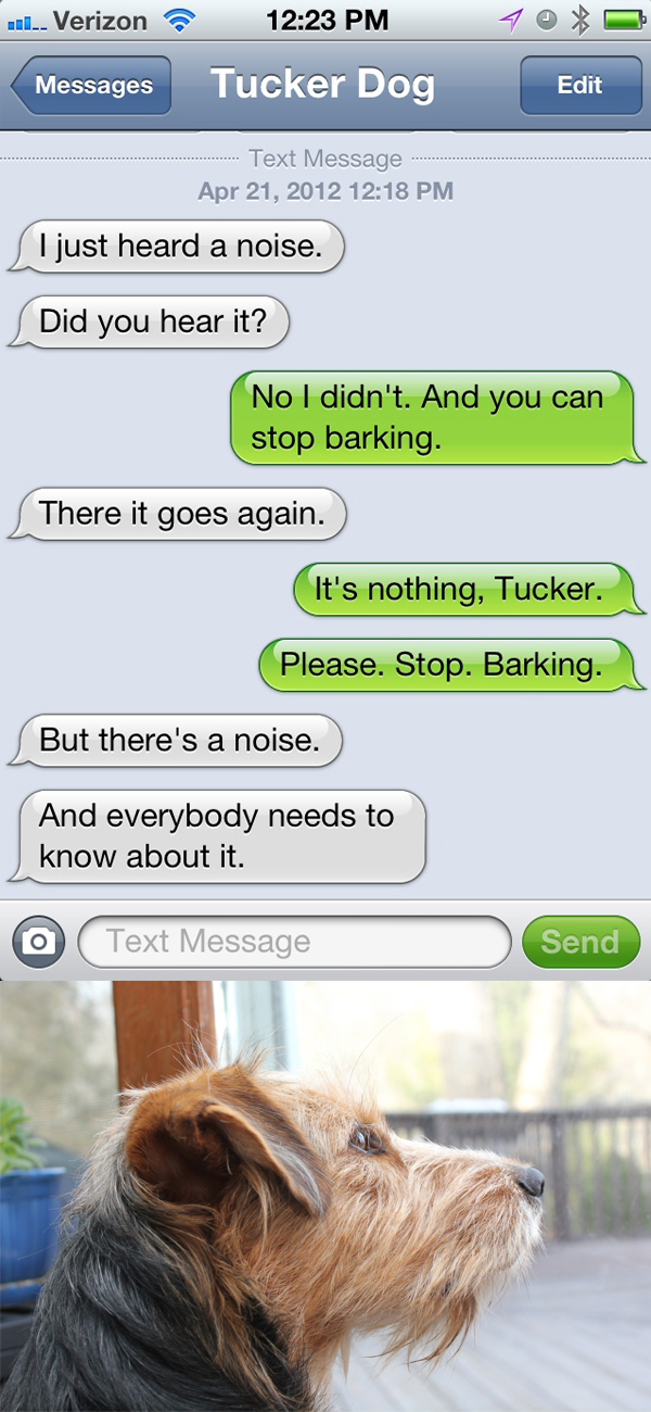 Text from dog: There's a noise and I *must* bark at it.