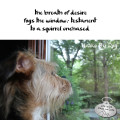 Haiku by Dog: the breath of desire / fogs the window: testament / to a squirrel unchased