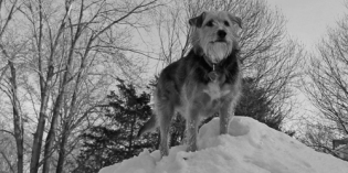 Sir Tucker Terrier Reaches the Summit of Mount Neverest