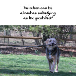 Haiku by Dog: Return