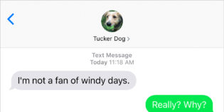 Text from Dog: Blowing in the wind