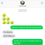 Text from Dog: Play ball!