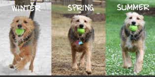 If a dog could sing: Throw it Again (Winter, Spring, Summer or Fall)