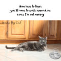 from here to there / you'll have to walk around me/ since I'm not moving #HaikuByCat #MicroPoetry